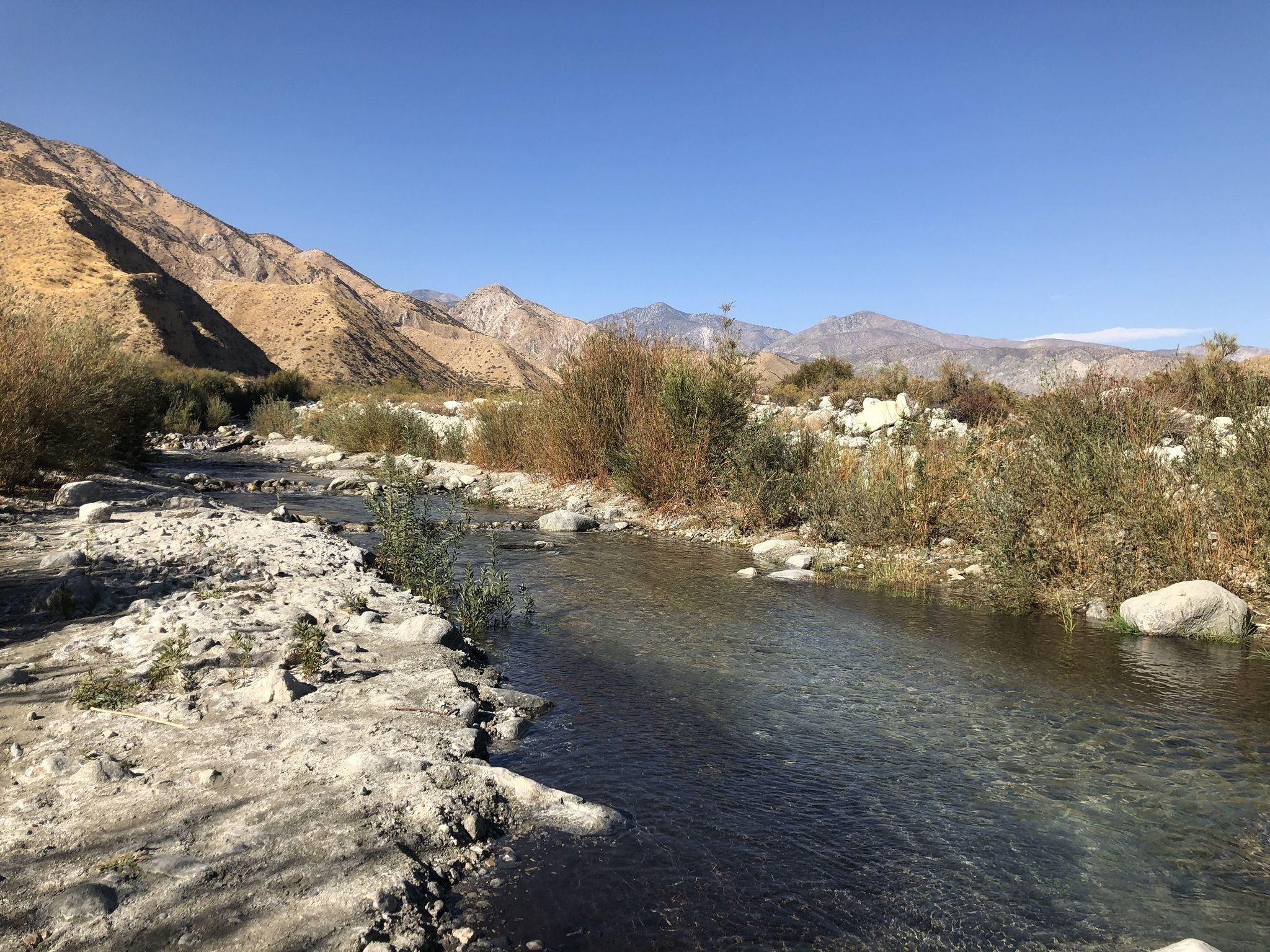 PEAK: White Water Canyon Loop - DIFFICULTY: 2/5 SCENERY: wild flowers, oasis, wild life, washed out, river, scramble, rocksFUN FACT: puppers/doggos/floofs are allowed on trail (on leash...but still)