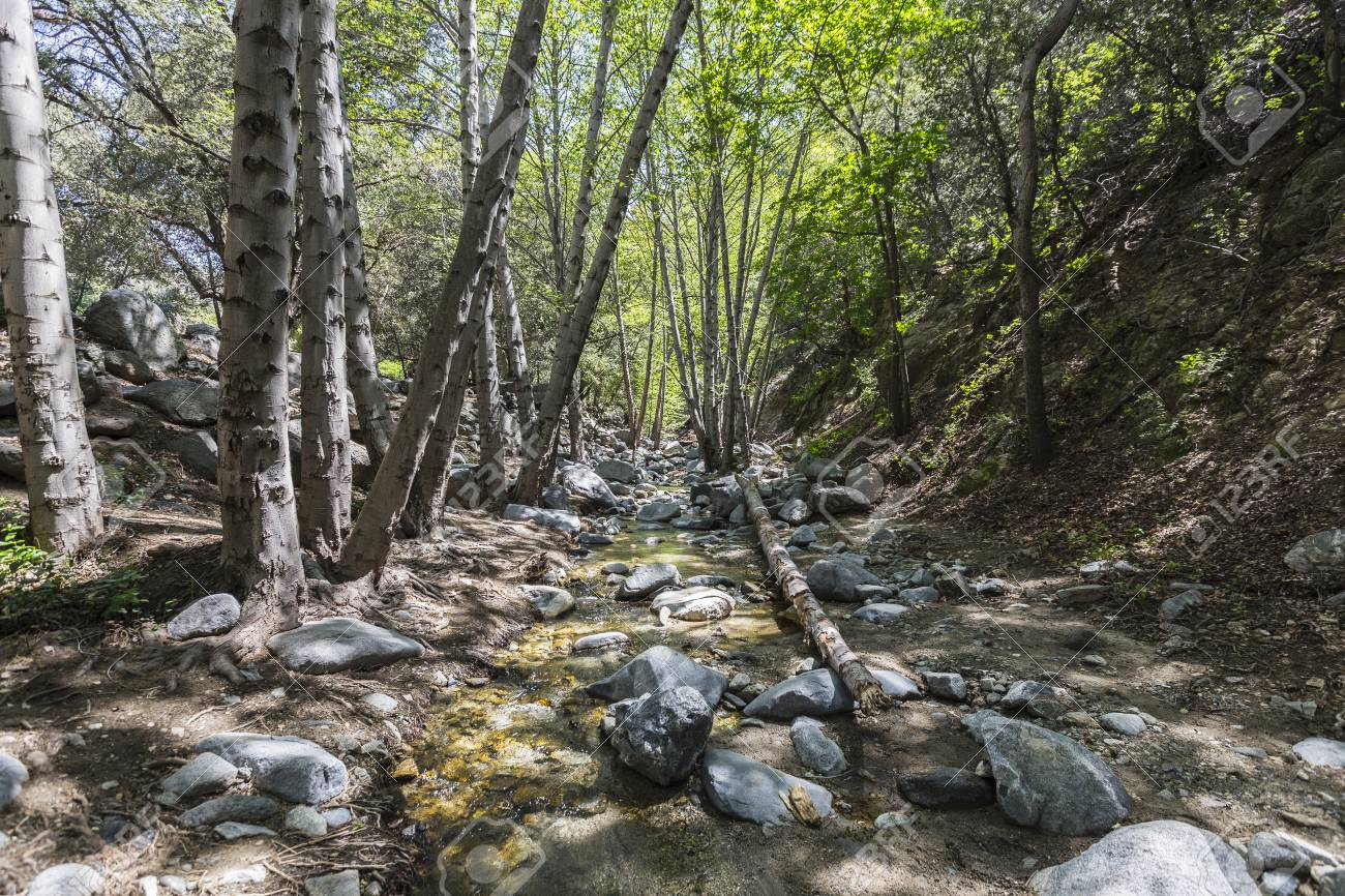 PEAK: Bear Canyon - DIFFICULTY: 3/5SCENERY: The entire Angeles National Forest, and possibly a creek if it hasn't dried up over summer!FUN FACT: There's a swimming hole at the top of Switzer Falls if you can scramble up the trail on the side of the falls!