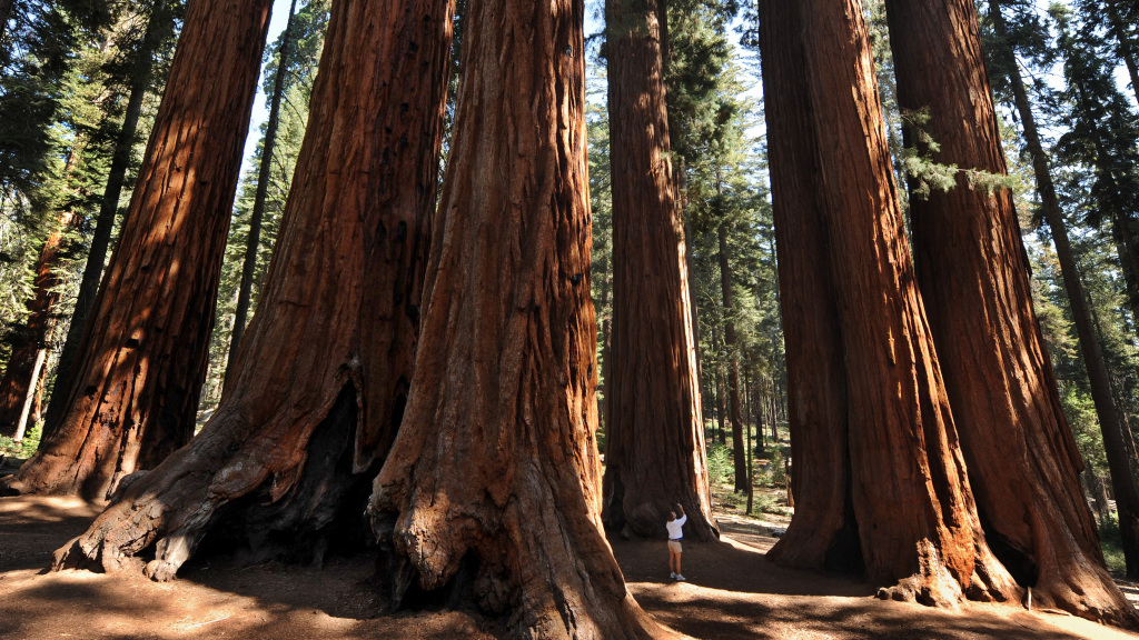 PEAK: Shaver Lake and Sequoia National Park - DIFFICULTY: 1/5SCENERY: Giant trees!! A cool lake!!