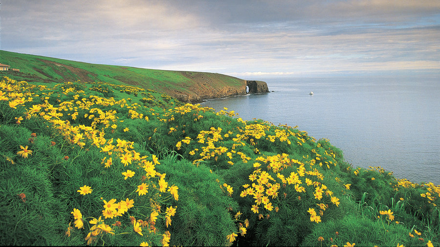PEAK: Santa Cruz Island - Santa Cruz Island is part of Channel Islands National Park!DIFFICULTY: 3/5SCENERY: The whole package - wildflowers, beaches, cliffs, sunset, sunrise, and hopefully some wildlife sightings.FUN FACT: The Channel Islands are among the nation's least-visited national parks.