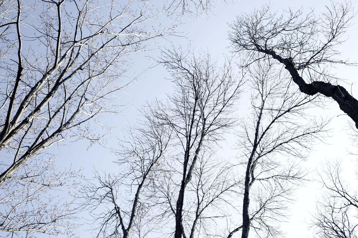DAGS_TREES_IN_WINTER_04.jpg