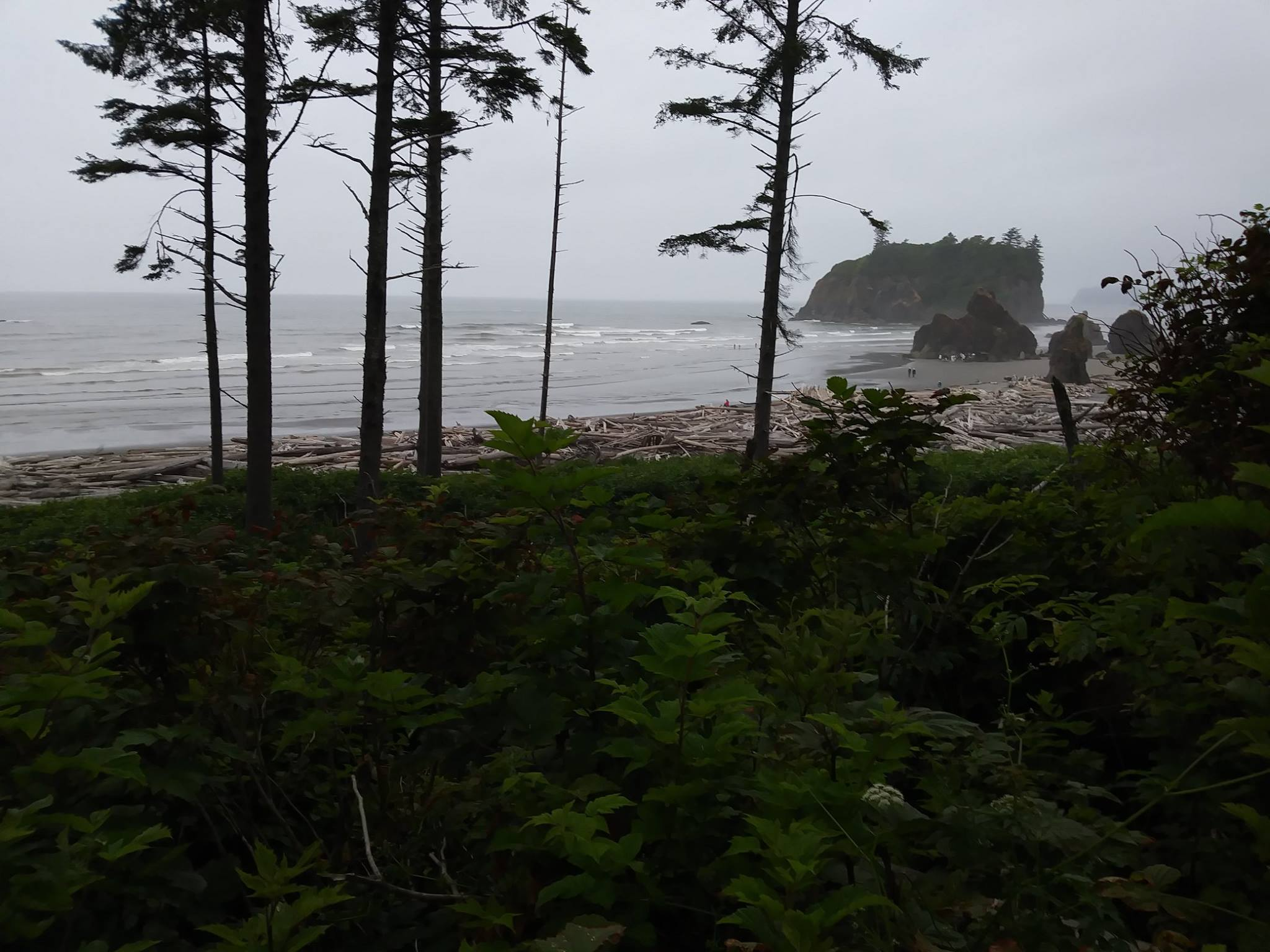Beach Day, 2017
