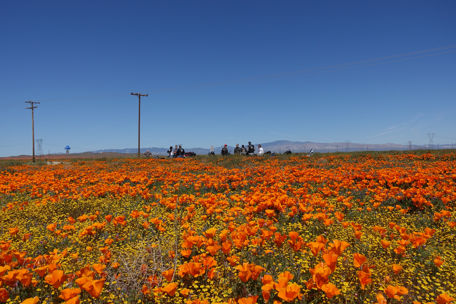 Ride to the Poppies - 4.13.2019