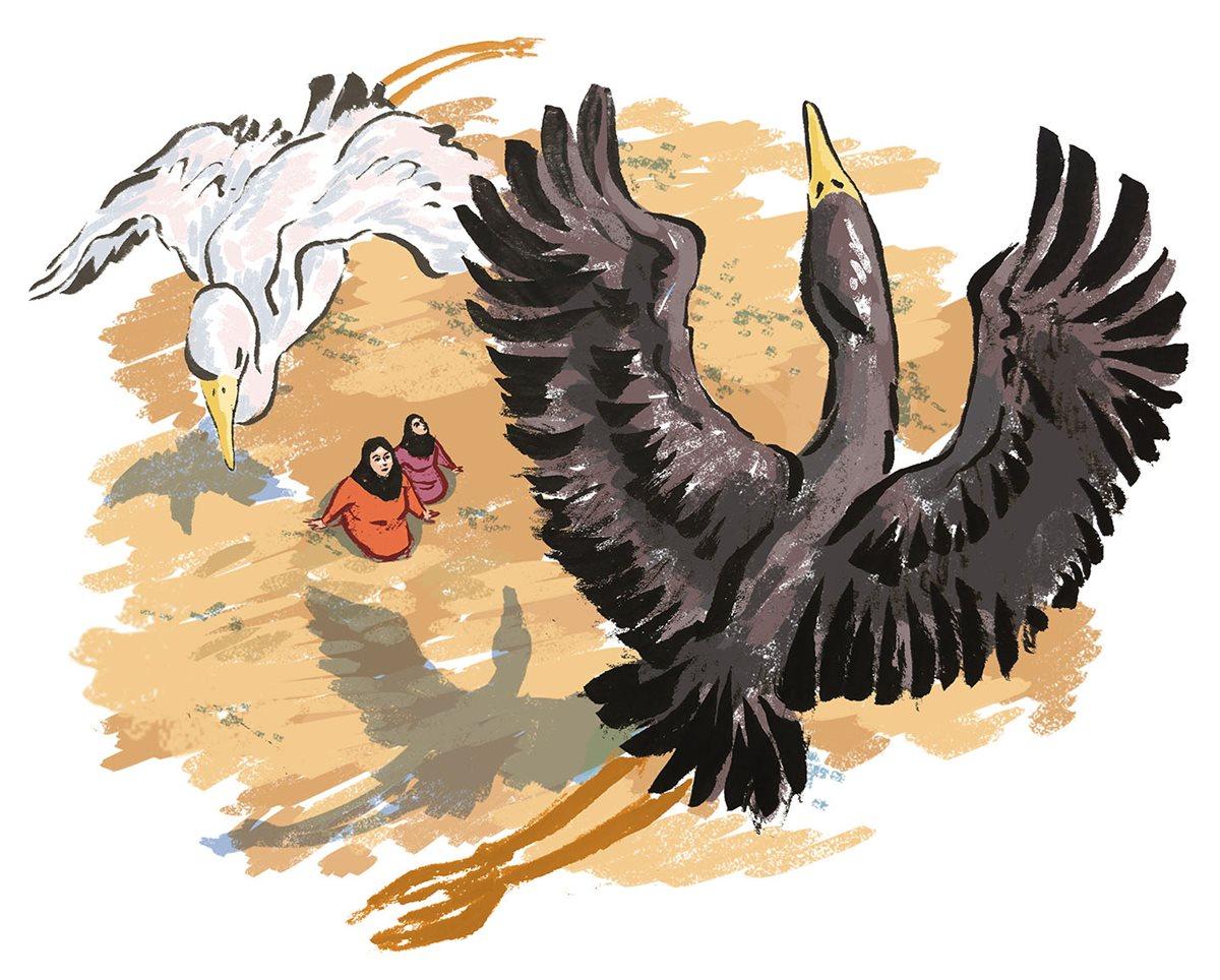 bh birds.jpg