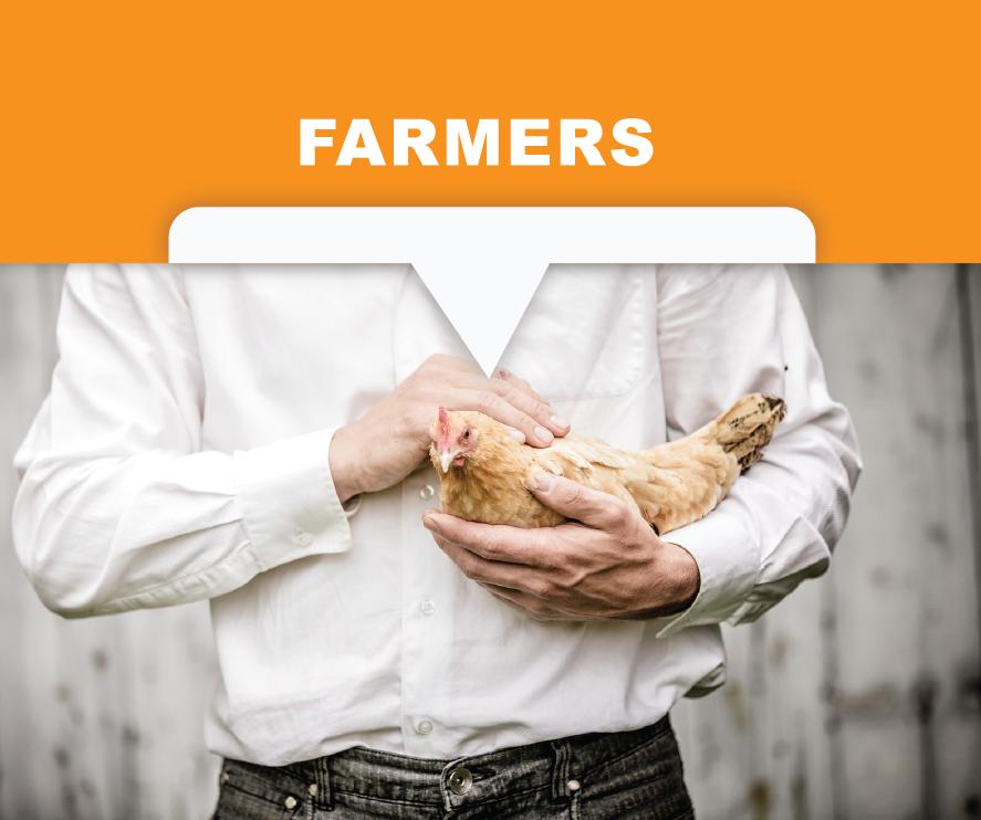 Polypropylene egg belts for farmers