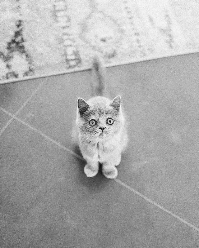 Kitten on film #canon1v #tmax3200 #richardphotolab #lulusprinkles