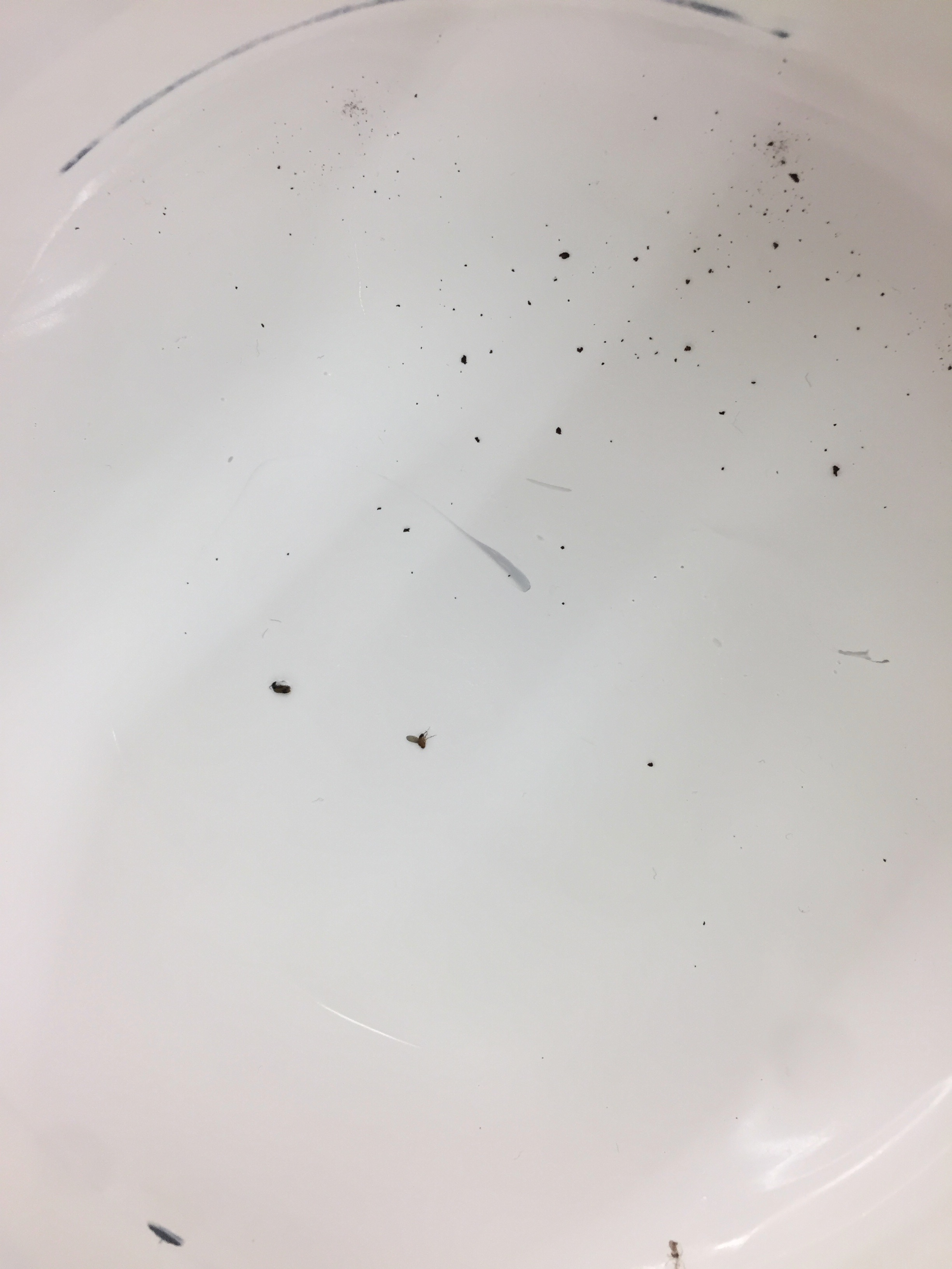 Found a bug in the white paint!