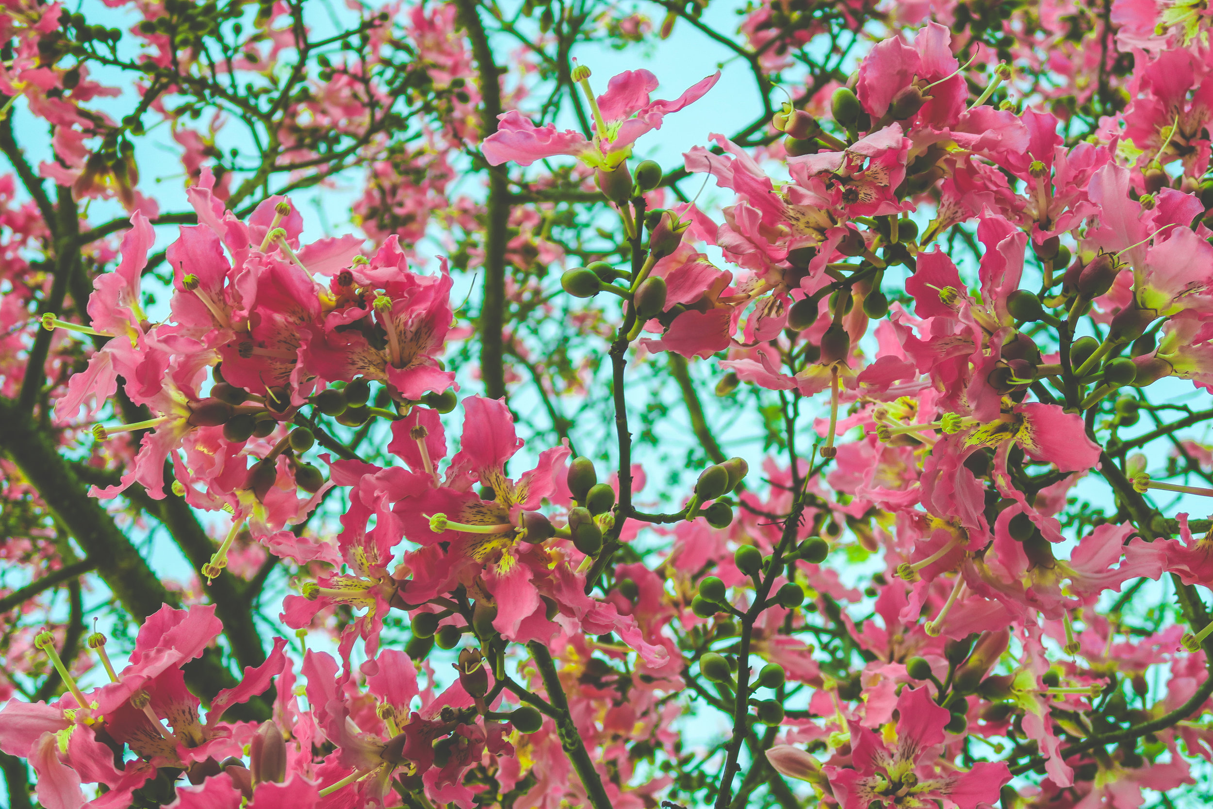 Spring blooms.  photo: Josh Coleman