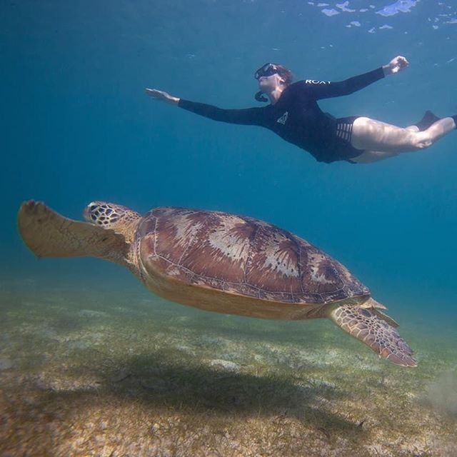 Today is World Turtle Day! And we're celebrating sea turtles - the 7 different species that we find in our global oceans: the Kemp's Ridley (Critically Endangered), the flatback, the leatherback (the deepest diver), the loggerhead (the largest), the green (Endangered), the hawksbill (Critically Endangered) and the olive ridley (the tiniest in SA's oceans). The latter 5 species are all found in South Africa's waters. So how can you help bring these creatures off the Endangered list? There's a lot, but here's a start: don't buy those tortoiseshell souvenirs, know your seafood and be a responsible consumer, reduce your plastic use (!) and support marine protected areas (MPAs), some of which protect turtle nesting grounds and beaches. __________ Photos: @petermarshallphoto and @iamwater_oceantravel guest Jenny meet an Endangered green turtle in the coastal waters of Madagascar