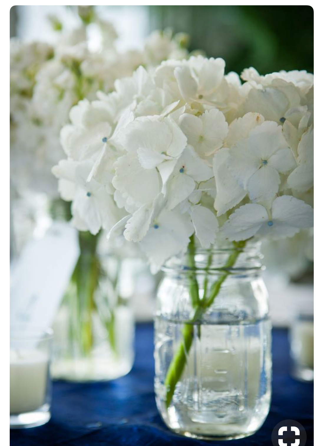 Hydrangeas, another of the 4 favorites...