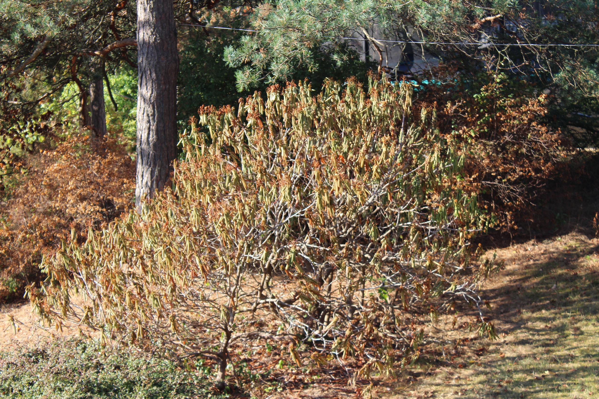 Dette var en  Rhododendron