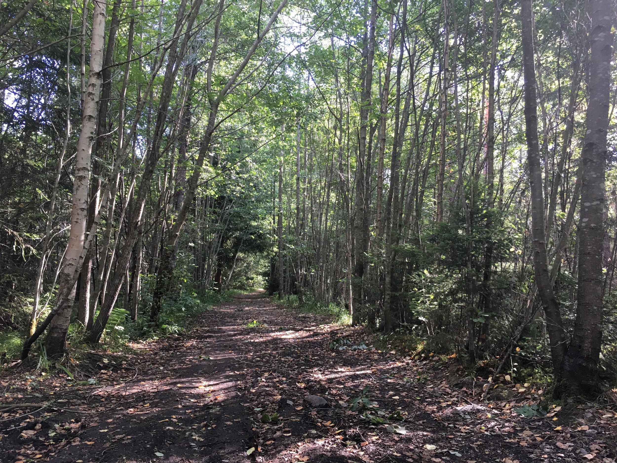 Kongeveien på Mosseskogen en augustdag 2018
