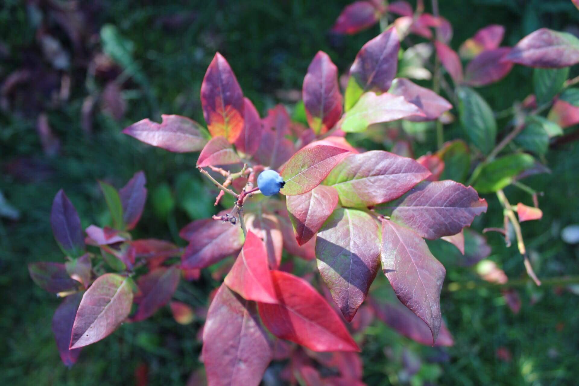 Fargene dukket opp på slutten av den milde høstmåneden