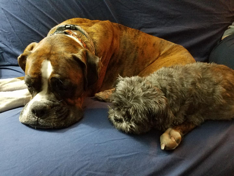 Mason & Zoe, friends again