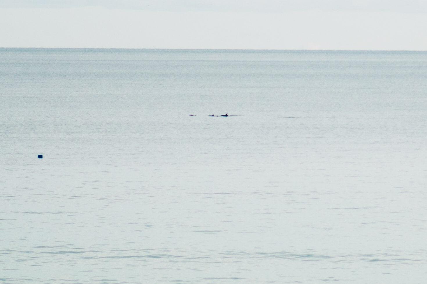 Dolphins at Gylly Beach