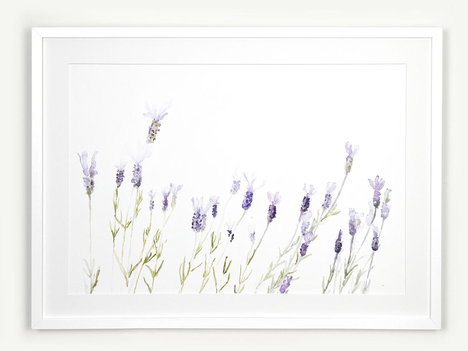 Link to framed lavender watercolour painting by Jennifer Glover
