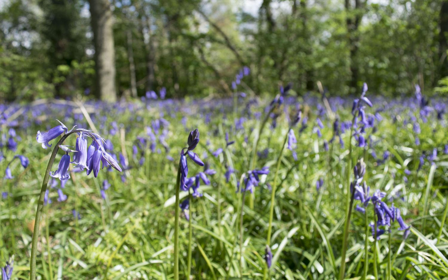 bluebell-journal.jpg