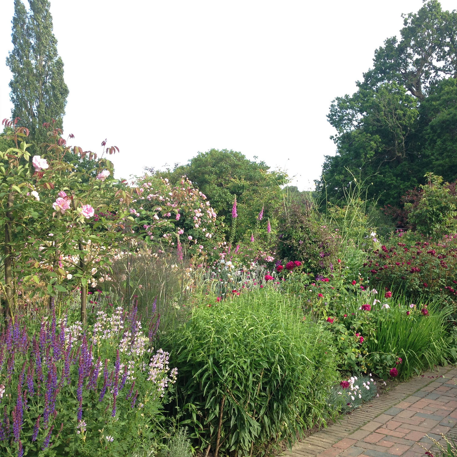 Sissinghurst rose borders with not a patch of earth to be seen
