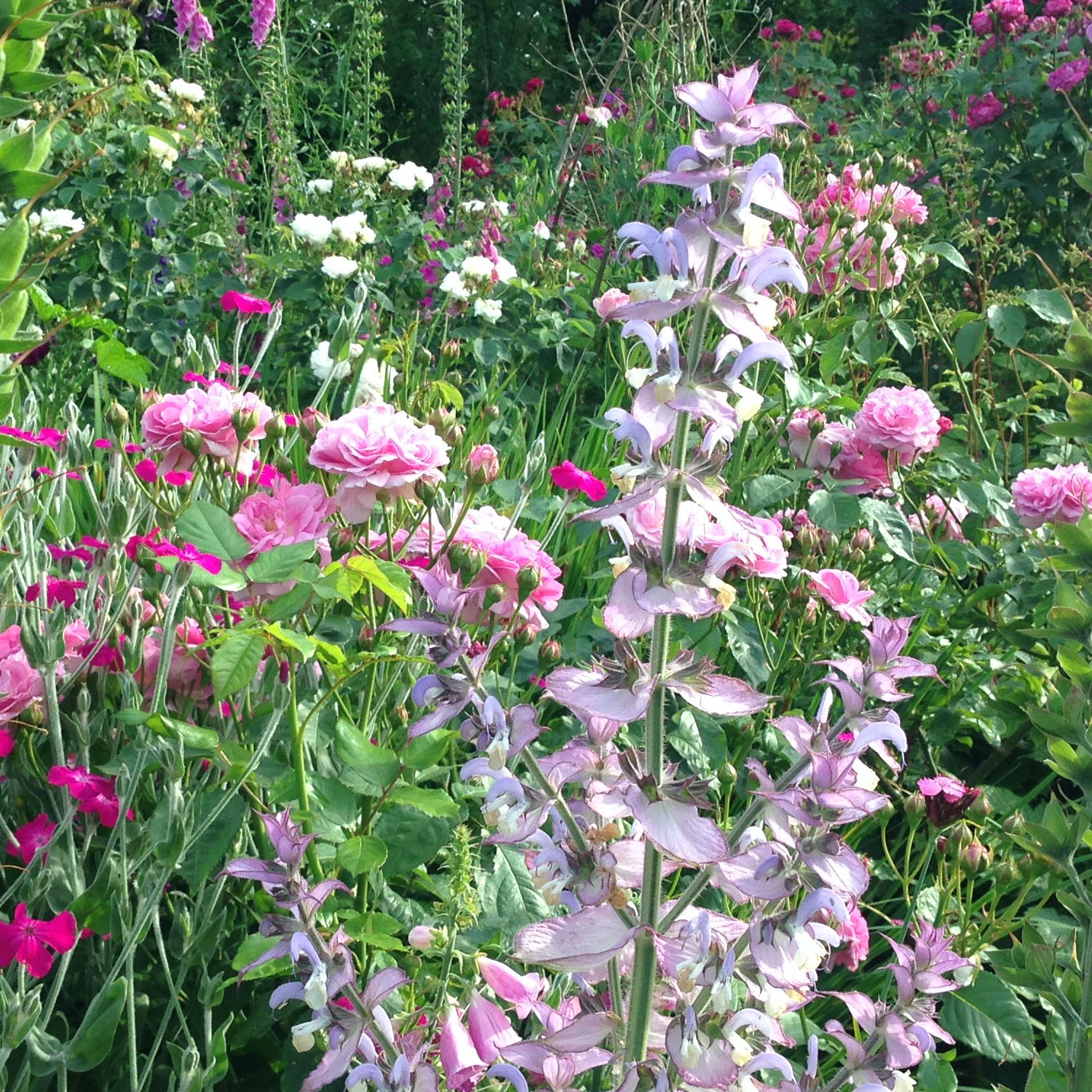 A heady mix of romantic pinks – magical planting at Sissinghurst