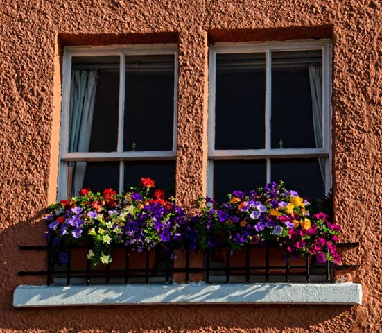 window boxes 2013.jpg