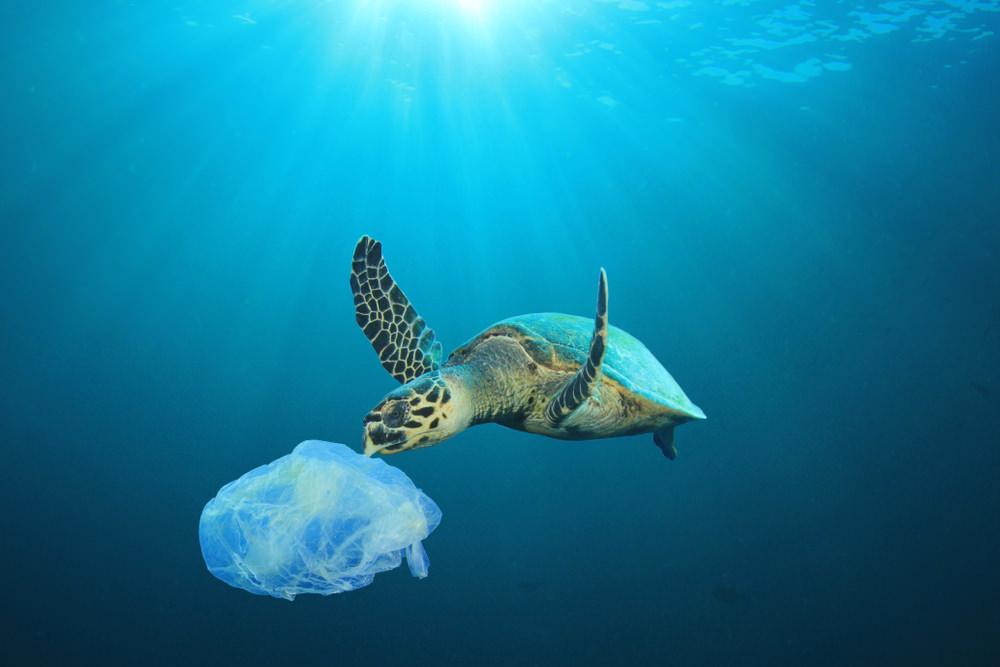 moessence.com-war-on-plastic-branding-for-bamboo-and-coconuts-sea-turtle-plastic-bag.jpg