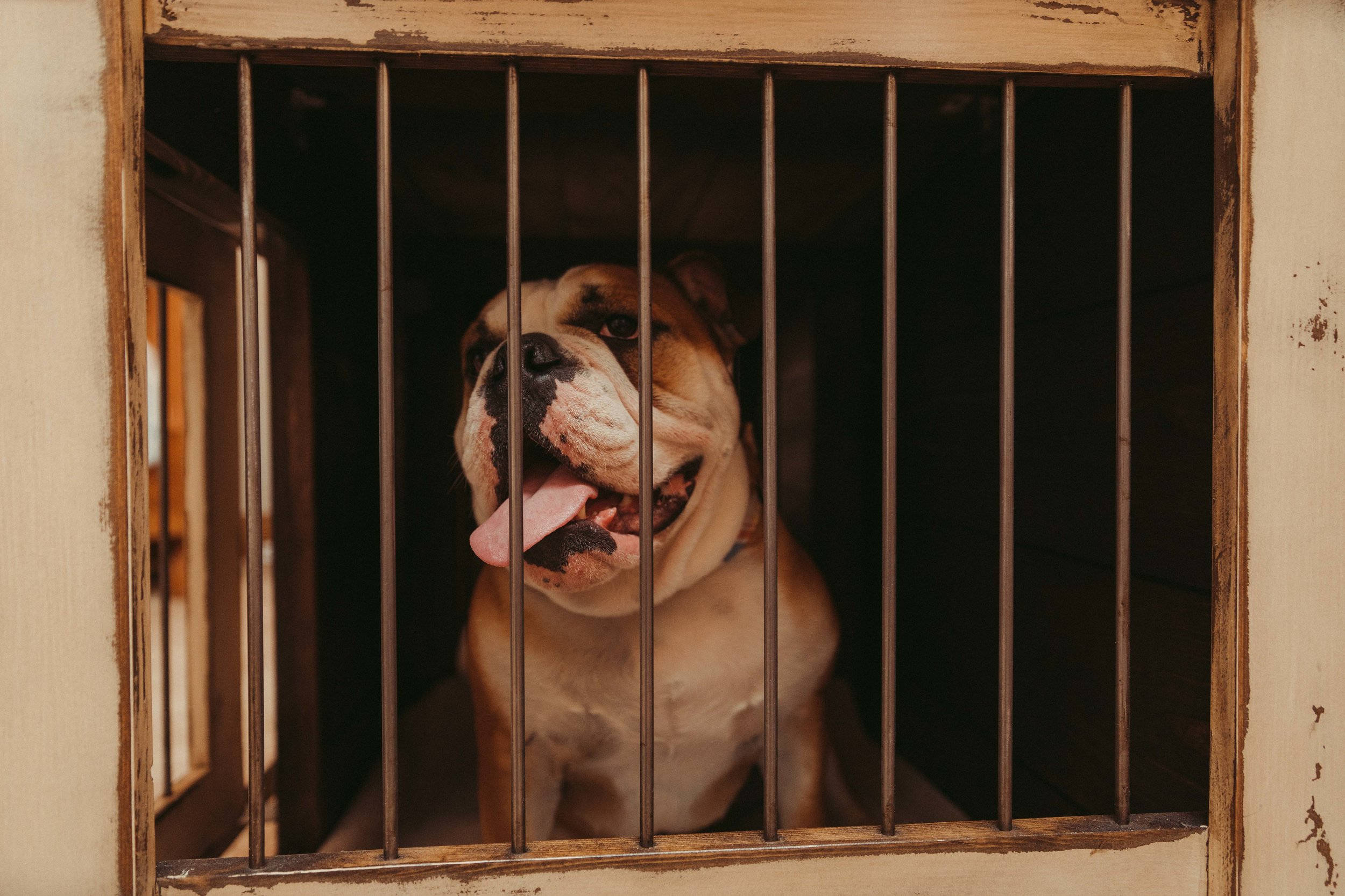 Buy Luxury Dog Kennels And Stylish Dog Crates From Kennel Crate