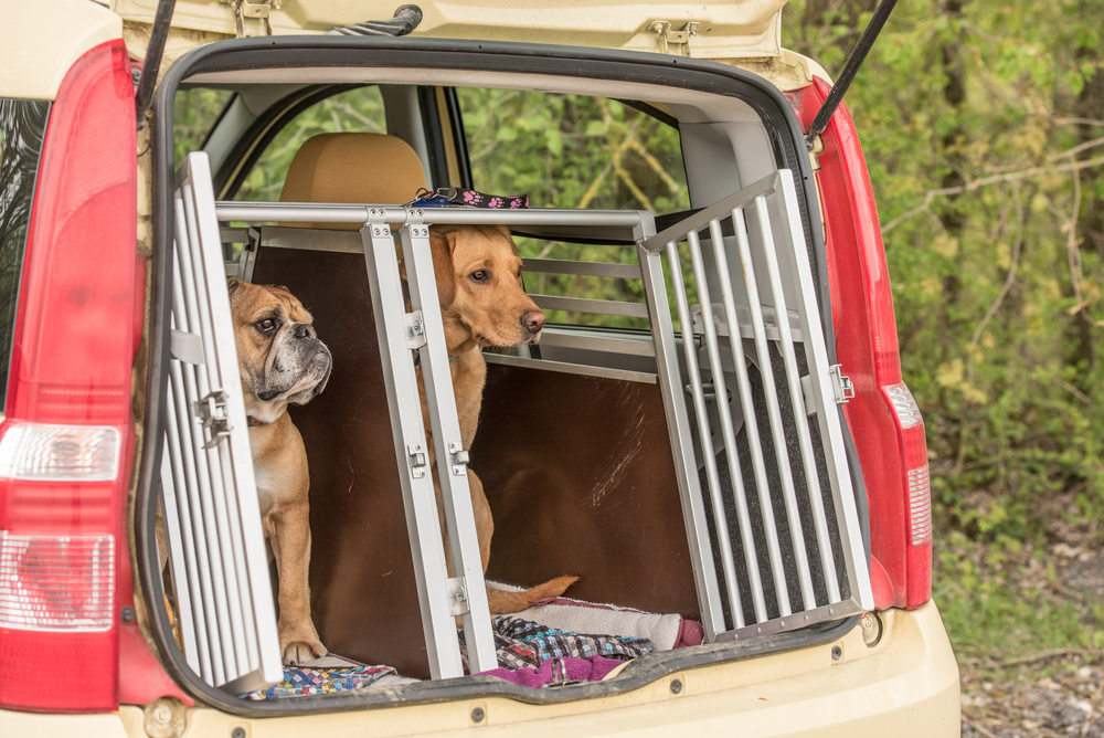 Dog Crate for Road Trips