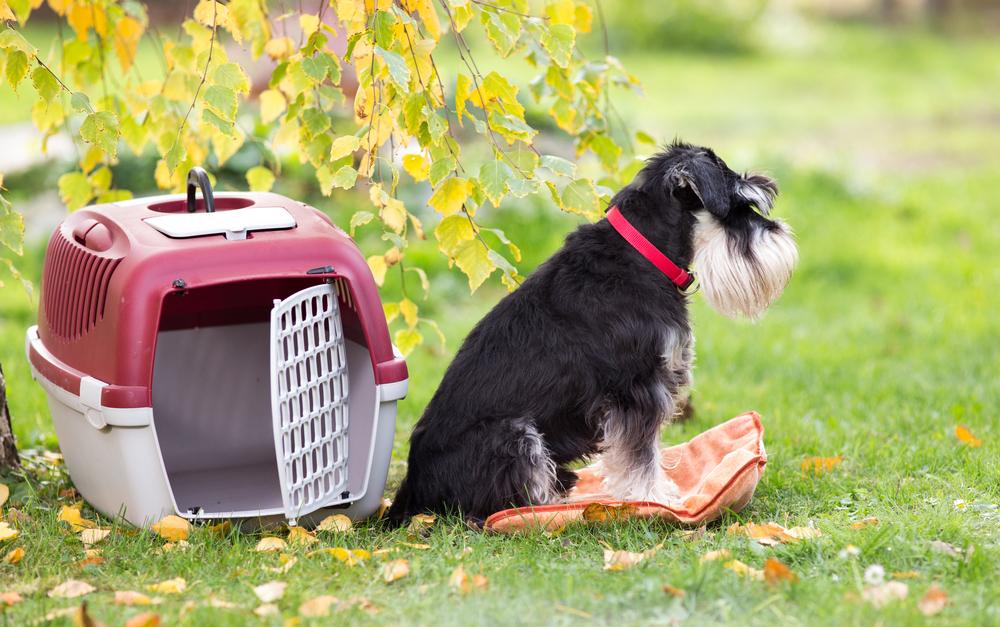Stylish Dog Crates.jpg