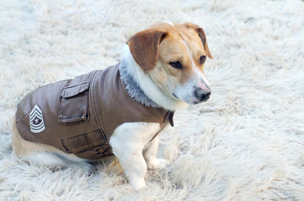 A Puppy Wearing A Jacket