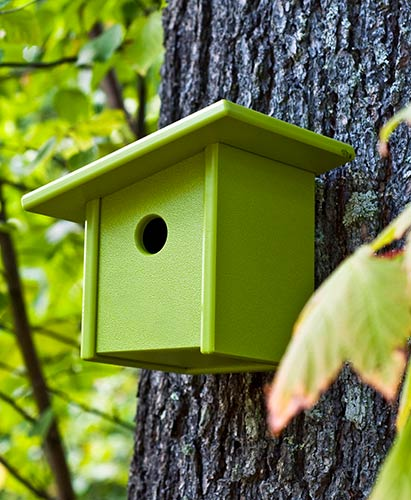 birdhouse_pitch_6214.jpg
