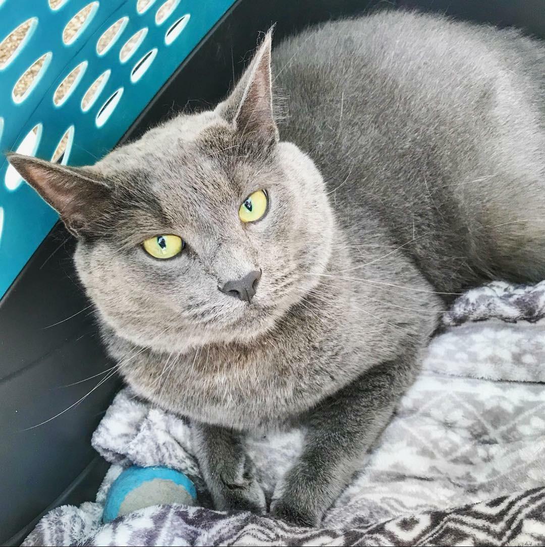 Pet Wellness Clinic -- Diesel Kitty.JPG