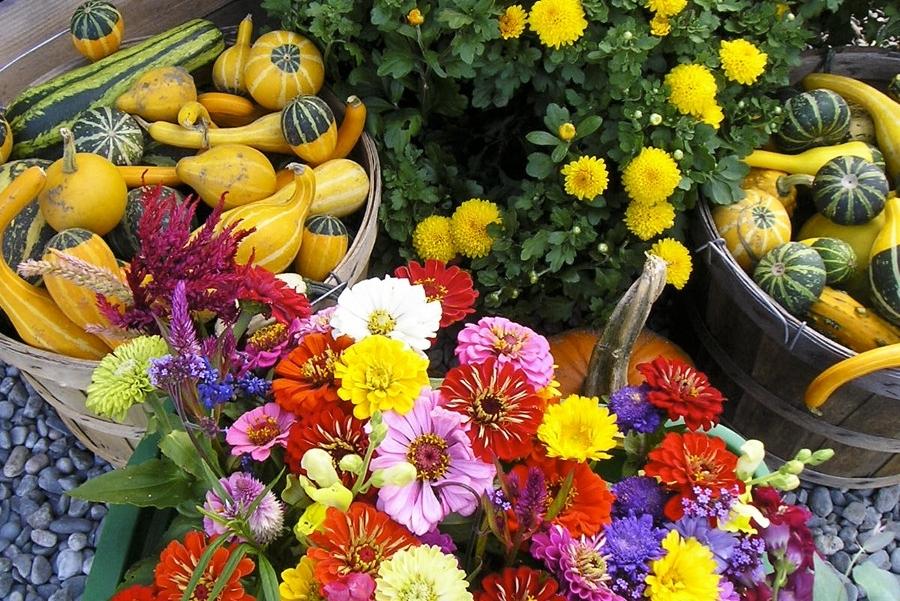 gords-flowers.jpg
