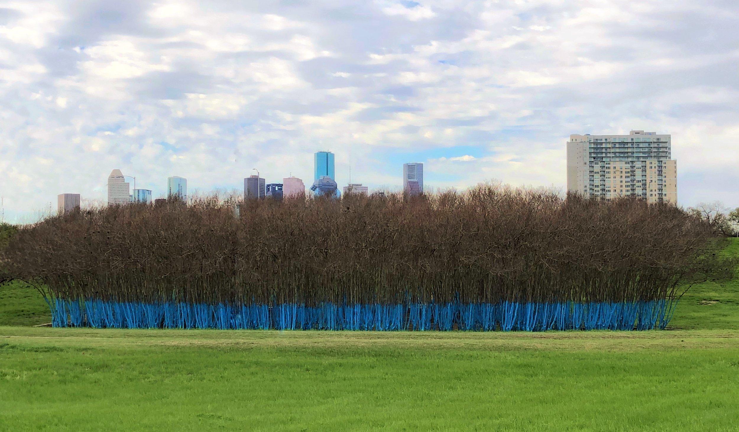 bluetrees.jpg