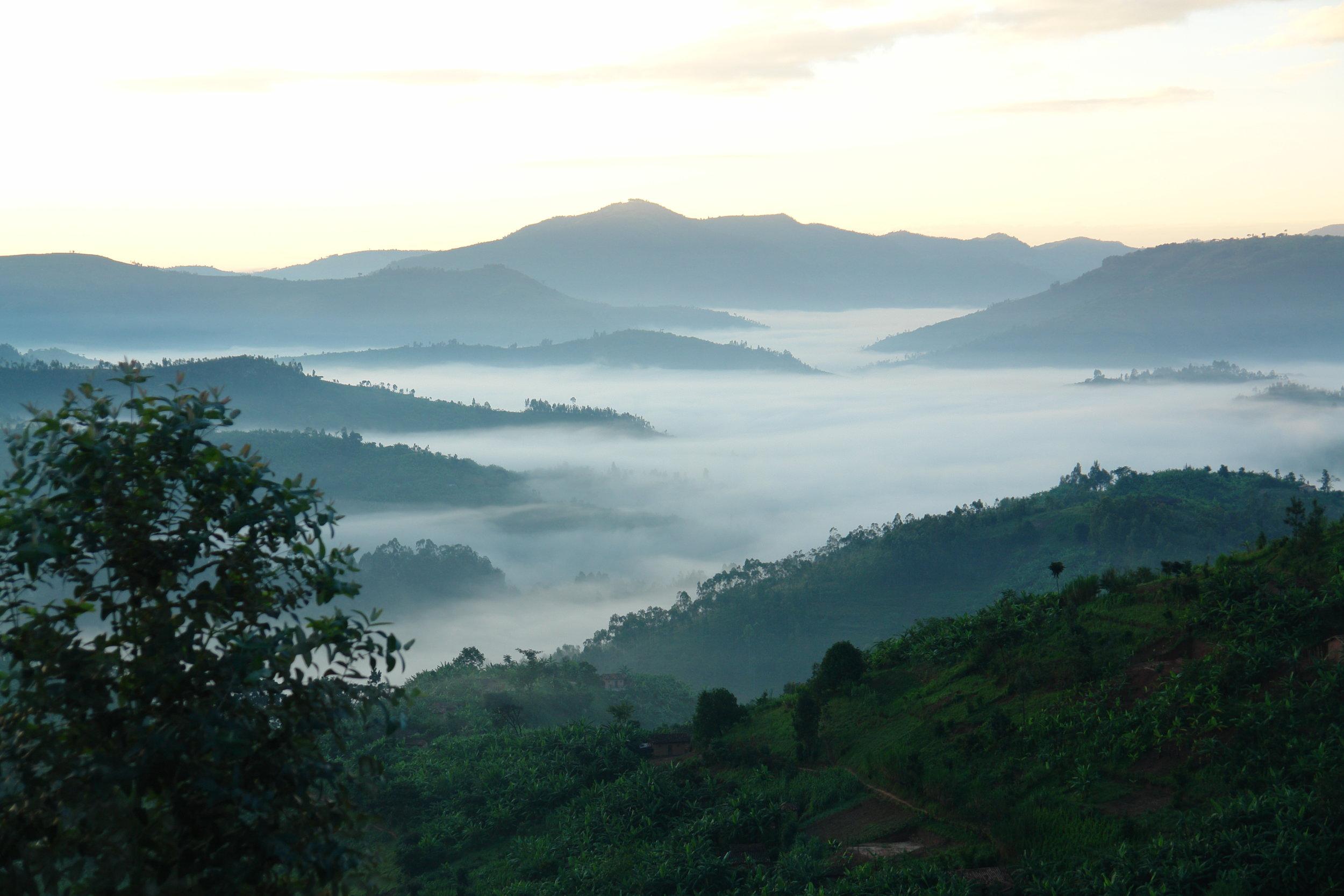 Magical Rwanda Mist