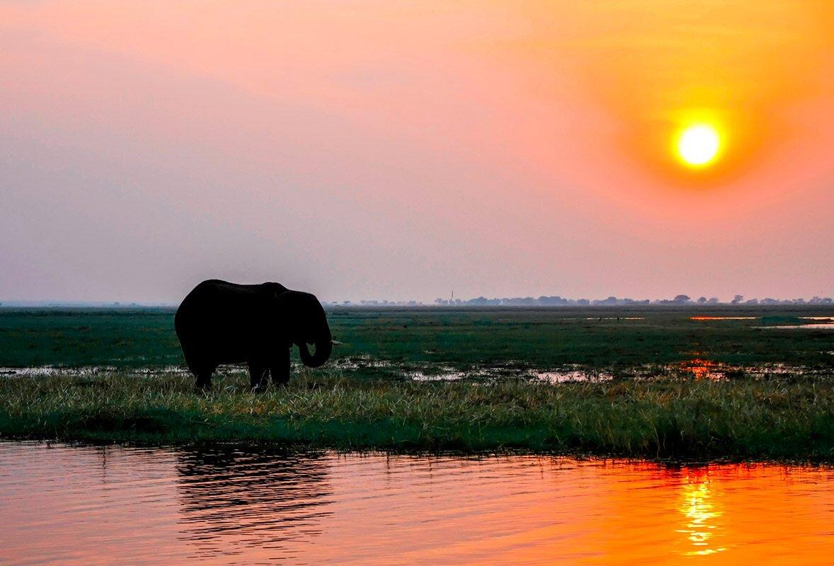 Sights on a Zambezi Rivers Sunset Cruise