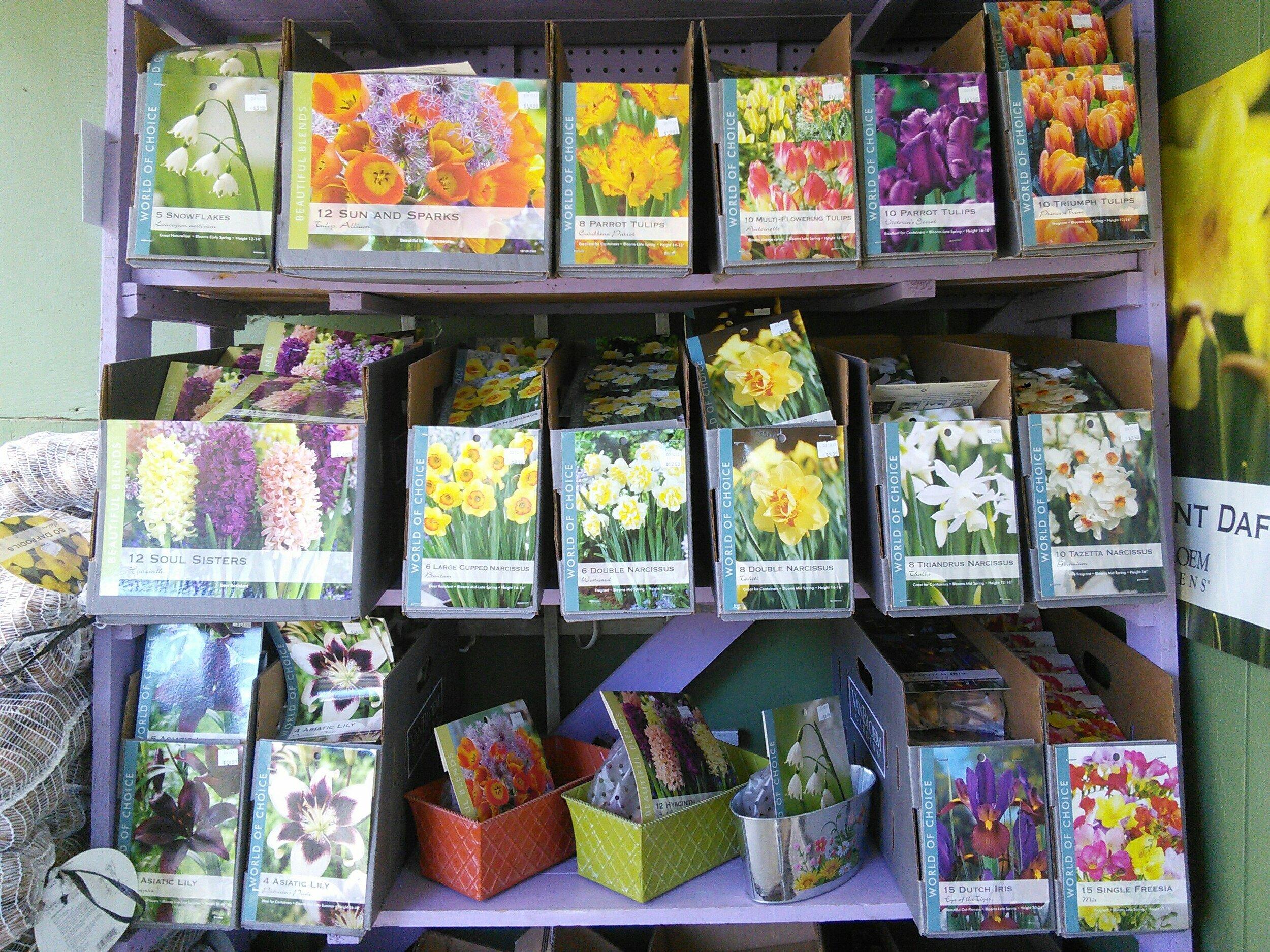 Spring blooming bulbs in stock!