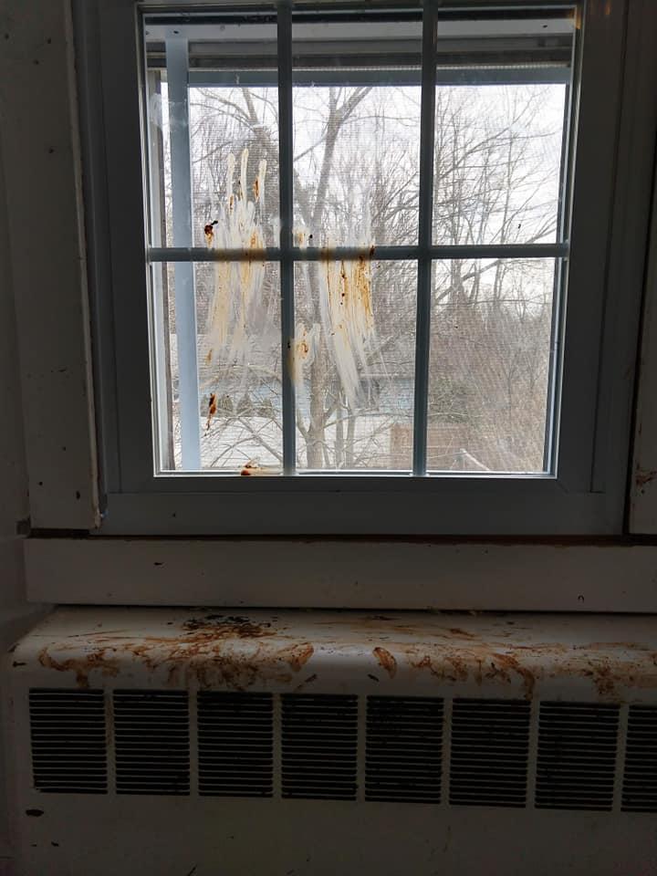 caleb window poop.jpg
