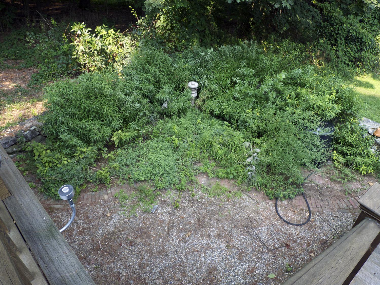 hidden garden found again