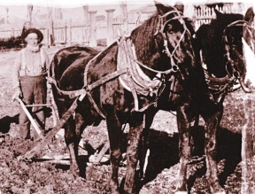 William Carter ploughing.jpg