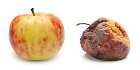 Good - bad fruit.jpg