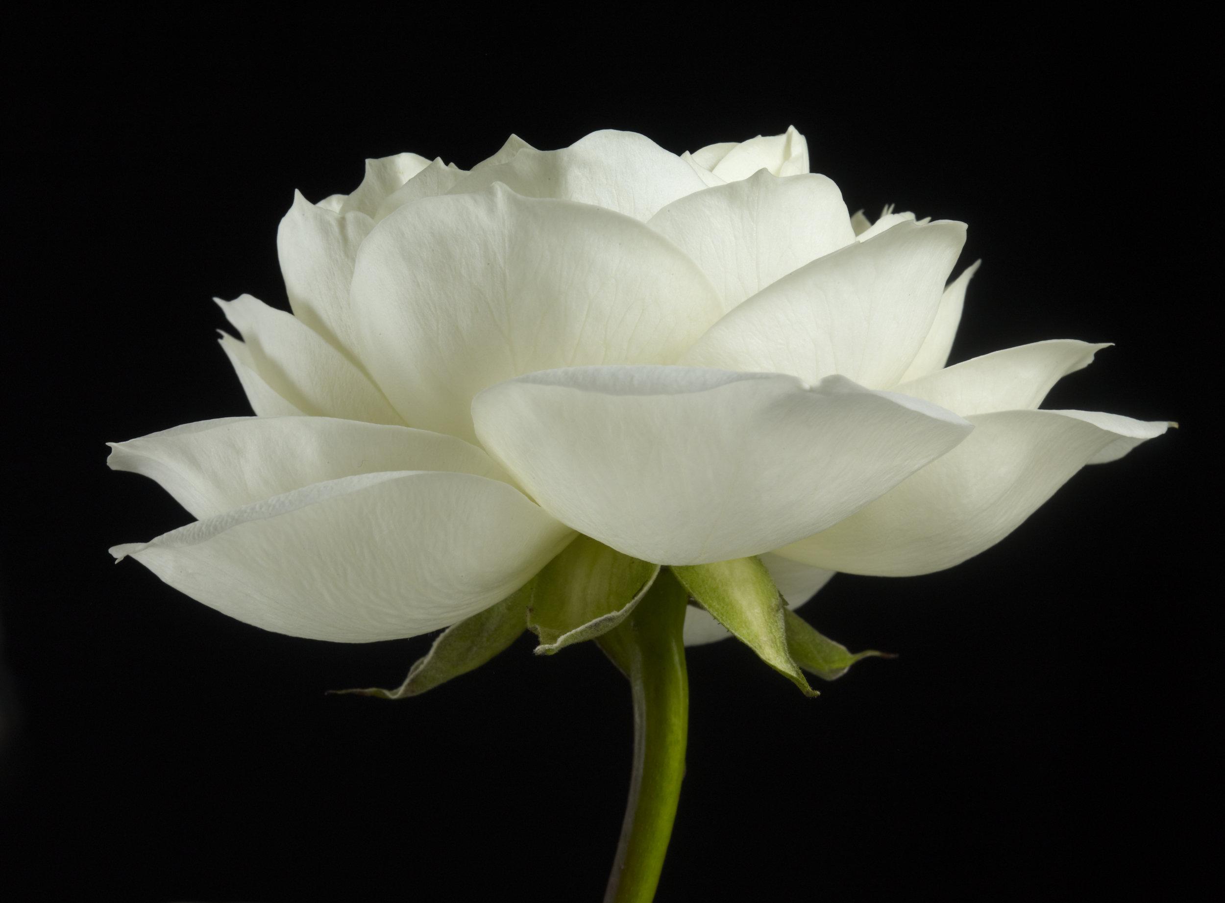 FloralShots_Friday_1.13.12 37660.jpg