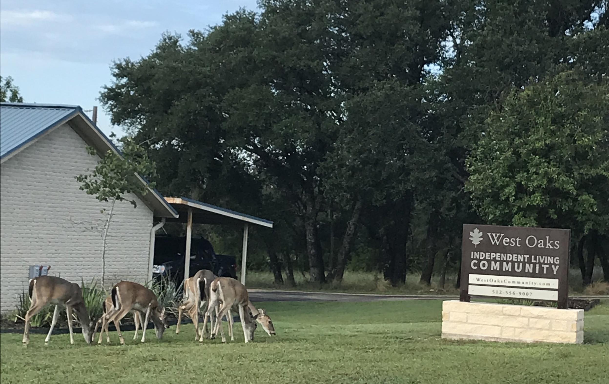 deer by sign.jpg