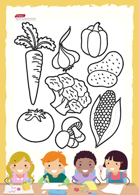 Colour in Vegetables with Yates