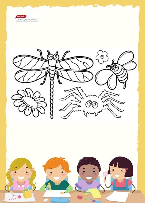 Garden Bugs - Colouring In