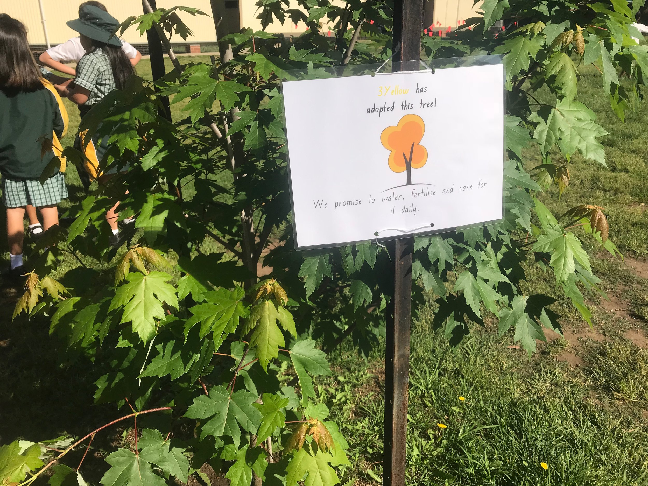carlingford-west-public-school-win-garden-grant (1).jpeg
