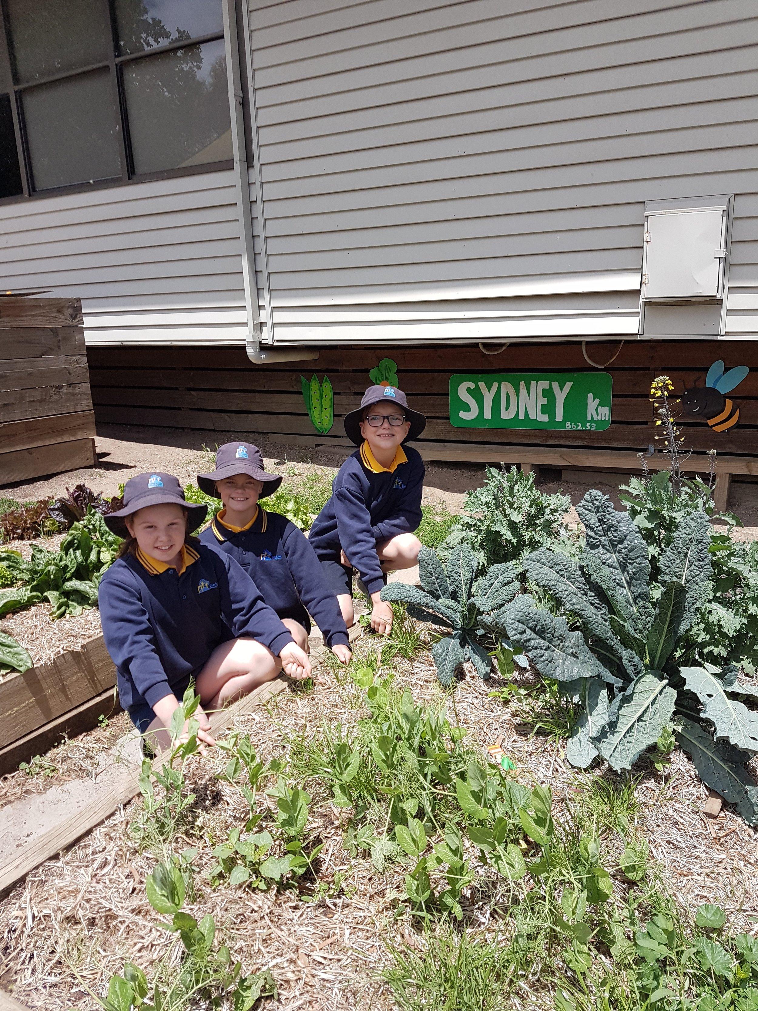 black-hill-primary-school-wins-yates-garden-grant (3).jpg