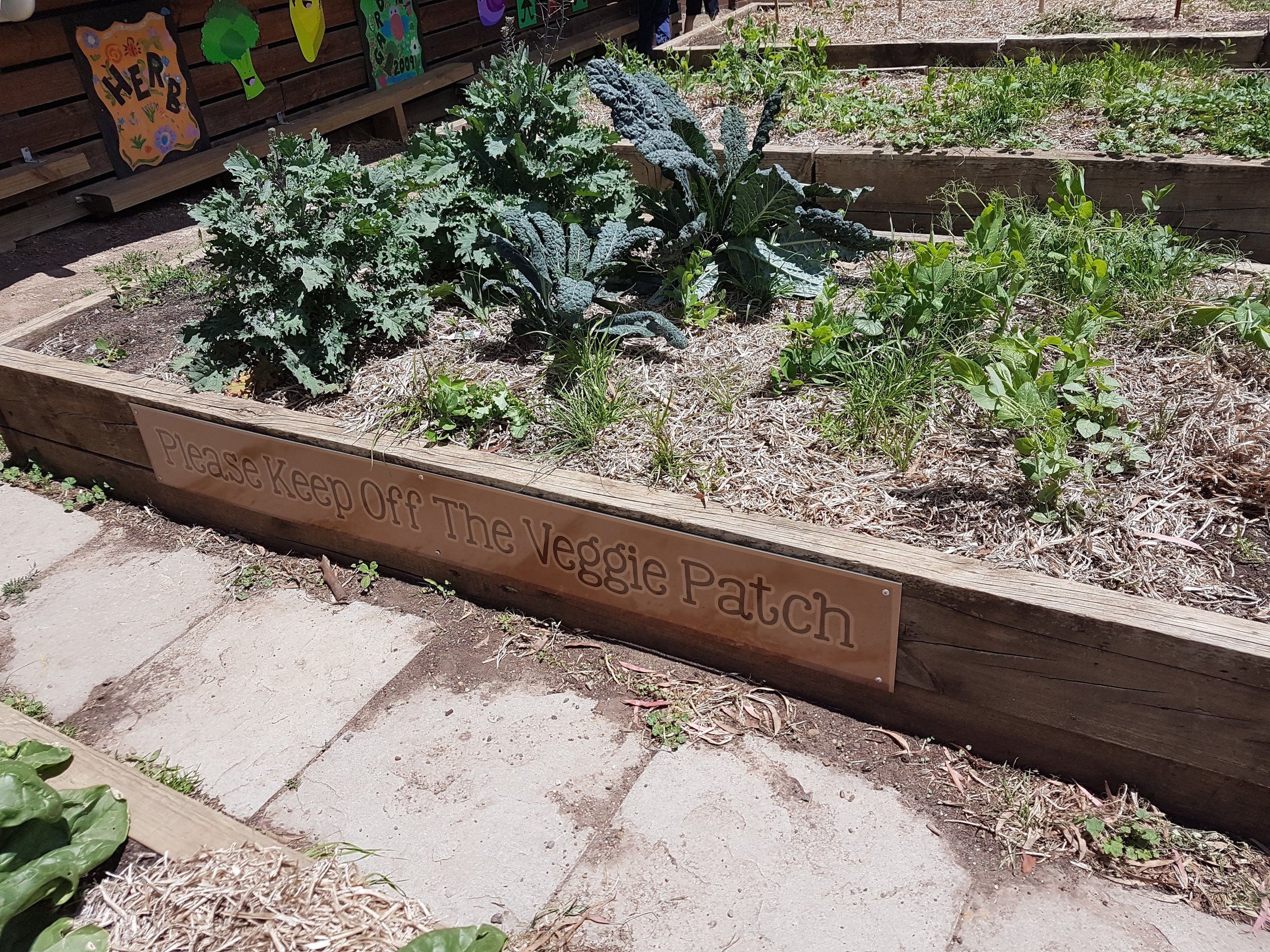 black-hill-primary-school-wins-yates-garden-grant (5).jpg