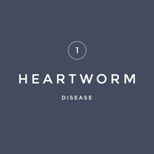 HEARTWORM    Read more