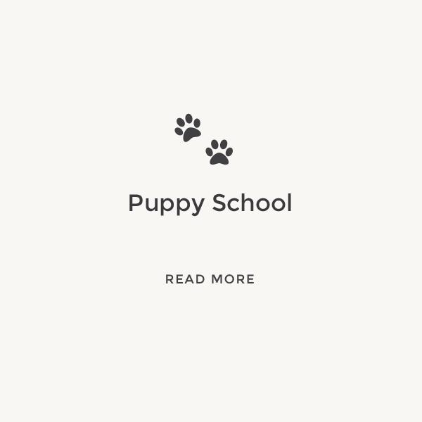 Puppy School    Read More