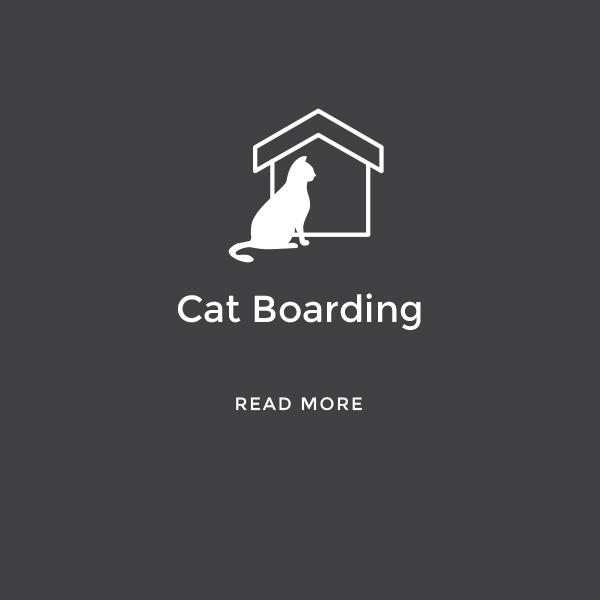 Cat Boarding    Read More